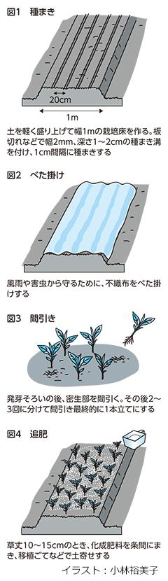 ホウレンソウは排水をよく