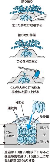 収穫の手順