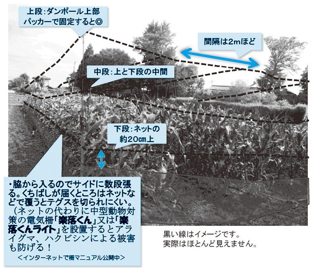 トウモロコシ畑での設置イメージ